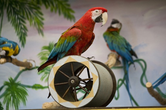 Macaw on a cilinder