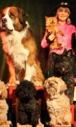 Lustige Hundeshow bei Showdreams.de - Agentur für Tierkünstler